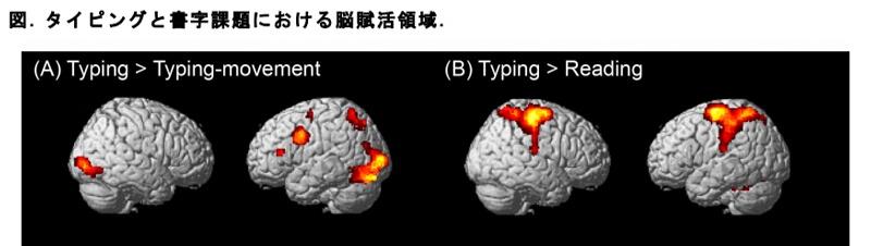 タイピングと書字課題における脳賦活領域